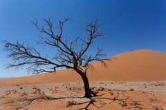 Dyn 45 i sossusvleien Namibia med det döda trädet Royaltyfri Foto