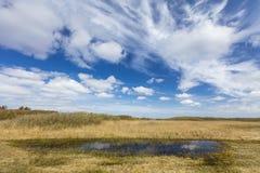 Dyn landskap i Nederländerna Royaltyfria Bilder