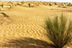 Dyn med buskar i Sahara Desert, Tunisien fotografering för bildbyråer