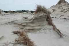 Dyn med gräs i blåsiga Januari på kusten av Nordsjö i Zeeland i Nederländerna arkivfoto