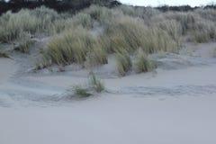 Dyn med gräs på kusten av Nordsjö i Zeeland i Nederländerna arkivfoto