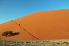 Dyn 45 nära ingången av Sossusvlei och Deadvlei i Naukluft parkerar i öken för de Namib i Namibia Arkivbilder