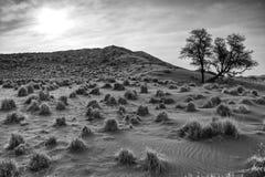 dyn namibian Arkivfoto