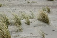 Dyn på Nordsjön fotografering för bildbyråer