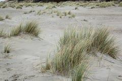 Dyn på Nordsjön arkivbilder