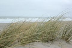 Dyn på Nordsjön royaltyfria foton