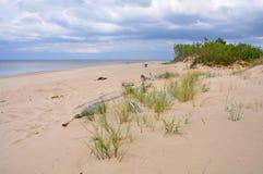 Dyn Saulkrasti, Östersjön, Lettland royaltyfria foton