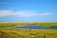 Dyn sjö De Muy på nationalparken i Nederländerna på ön Texel royaltyfri fotografi