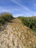 dyn som är gräs- över sandspår Fotografering för Bildbyråer