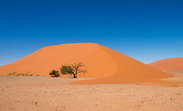 Dyn 45, Sossusvlei, Namib-Naukluft nationalpark Arkivfoto