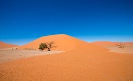 Dyn 45, Sossusvlei, Namib-Naukluft nationalpark, Namibia Royaltyfri Bild