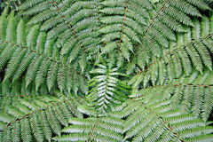 Dynamic fern composition Royalty Free Stock Photos