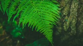 Dynamic fern composition, vibrant green background texture royalty free stock photos