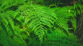 Dynamic fern composition, vibrant green background texture stock photography