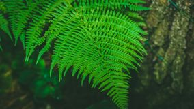 Dynamic fern composition, vibrant green background texture stock images