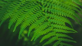 Dynamic fern composition, vibrant green background texture stock image