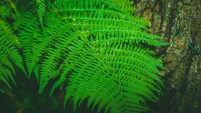 Dynamic fern composition, vibrant green background texture royalty free stock photo