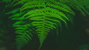 Dynamic fern composition, vibrant green background texture royalty free stock images