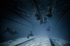 Dynamic With Fins (DYN) Performance Wide Underwater View. Stock Photography
