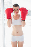 Dynamic fit brown haired model in sportswear wearing red boxing gloves Stock Photo