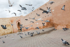 Dynamic flying doves at the old town medina Marrakech Stock Photos