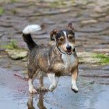Dynamic Mixed-Breed Dog Stock Photography