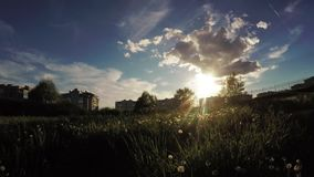 Urban lawn at sunset. Dynamic panorama against the sun by a lawn town with dandelions stock video footage