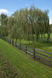 Dynamic row of weeping willow trees surrounded by. A fence  in Charles Town, WV Stock Photos