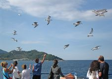 Dynamic scene of feeding seagulls Stock Photography