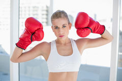 Dynamic young blonde model wearing boxing gloves Royalty Free Stock Photography