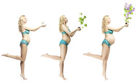 Dynamics of pregnancy beautiful blonde Stock Image