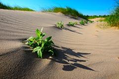 dynamiczny wydm wysokiego zasięgu piasku Obrazy Stock