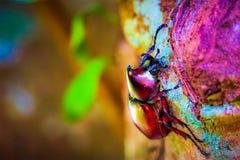 Dynastinae auf der Niederlassung im Wald stockfotografie