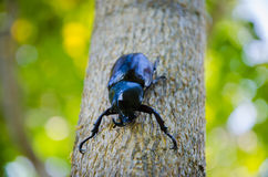 Dynastinae  Insect Stock Photography