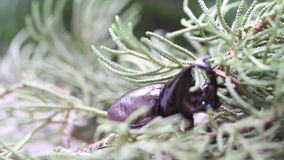 Dynastinae o escarabajos de rinoceronte en árbol almacen de metraje de vídeo