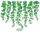 Dyndać zielonego bluszcza Roślina liścia obwieszenie od above Liście odizolowywający na ogrodowego bielu ściany tła wektorowej il royalty ilustracja