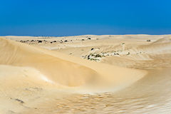 dyner fuerteventura fotografering för bildbyråer