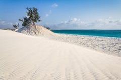 Dyner och wild strand Arkivfoto
