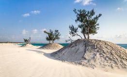 Dyner och wild strand Arkivbilder