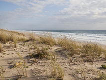 Dyner på atlantisk kust av Frankrike Royaltyfria Bilder