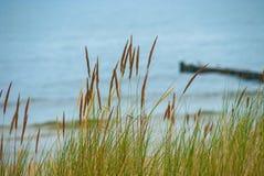 Dyngräs framme av det suddiga östliga havet av Tyskland Royaltyfria Bilder
