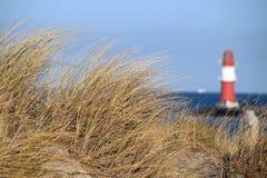 dyngräs nära havet framme av en fyr Fotografering för Bildbyråer
