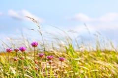 Dyngräs och blommor i eftermiddagsun Fotografering för Bildbyråer