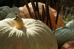 dynie halloween. fotografia stock