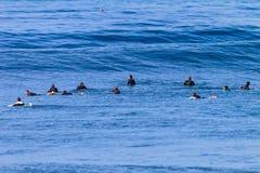 Dyningar för hav för Waves för bränningryttarefolkmassa väntande Royaltyfria Foton