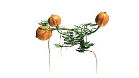 Dyniowa roślina z owoc Obraz Royalty Free