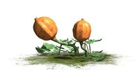 Dyniowa roślina z owoc Obrazy Royalty Free