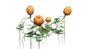 Dyniowa roślina z owoc Obrazy Stock