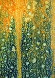 Dyniowa skóra zdjęcie stock