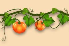 Dyniowy bat z liśćmi i baniami Realistyczna bezszwowa granica dla jesień projekta royalty ilustracja